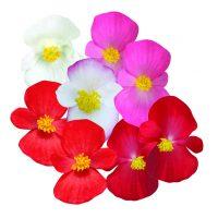 2086_8098_Begonia_Ambassador_Mixture.jpg