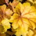 kuldkollastel lehtedel punased sooned