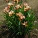 3279_9428_Iris_Paprikash-2-D.jpg